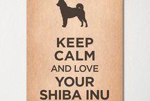 Shiba love ♥