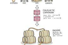 Wine Education / Wijneducatie
