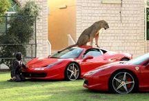 Lion Dubai / Ferrari & lion