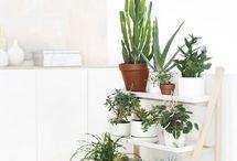 Home | Herbs