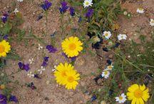Fiori di campo / Racconta la bellezza semplice, modesta, straordinaria dei fori di campo
