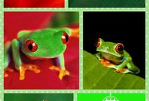 Frogs / by Alyson Wilbers
