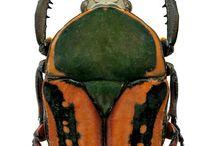 .bugs