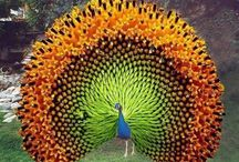 Birds ≧'◡'≦ Peacock's/Pheasants / Love the look of pheasants & peacocks