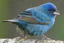 birds / by Jackie Billups