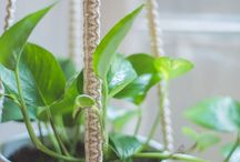 Makramee-Pflanzenschaukeln