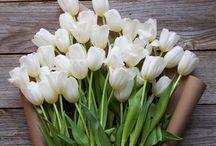 Virágok :)