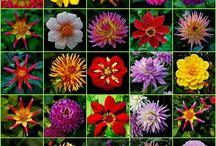 MY FLOWERS MY YARD / by Janet Marsh