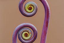 spirals / Spiral forms
