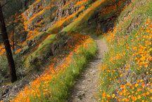 Yosemite / by Christine Pysz