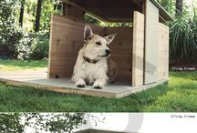 Dog house ideas