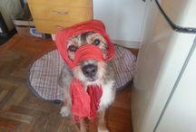 Dogs and cats / Lotta dura senza paura in Via Gramsci 27