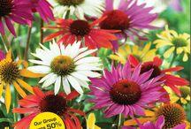 Flower Power Spring 2014 / Spring 2014 Fundraising Brochure