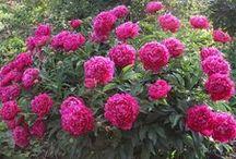 цветы уход