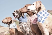 Accessorize Your Pup / Find the perfect accessory for your dog. www.scotchandhound.com