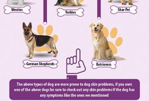 Dog Life / Our pets mean the world to us! This board is a great resource for pet owners for learning how to take the best care of man's best friend.