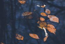 Fall / Autumn in blue