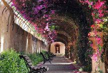 Flores / Flores e plantas