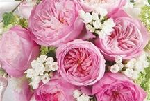 Flower Varieties {David Austin Roses} / Help you to see the David Austin range of roses!