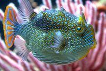 Fishes / Рыбы