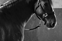 Horses / This board is about my passion for horses because I LOVE horses like CRAZY.