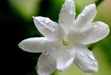 Qet Botanicals: Beautiful Botanicals / Nature's accessories.