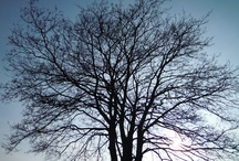 In-tree-guing / To arouse the interest or curiosity of one. To interest, fascinate or puzzle.