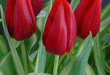 Flores que me encantam...