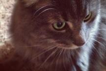 MONSTER <3 / My cat monster