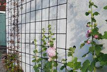 Spaljé/klätterväxter