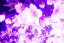 lindas imagens