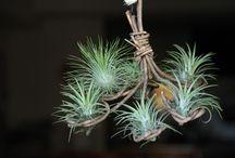 Air Plants DIY / DIY air plants holder
