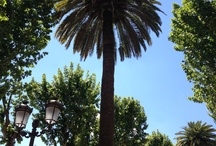 Palm trees / Palmes