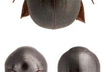 Ball bug