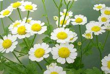 May June Flowers