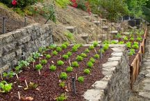 gardening on slopes - walls, beds, stairs - ideas
