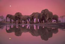 animals / by Darcy York