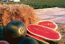 organic fruit & vegies