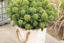 Groenblijvende planten voor de vierkante plantenbakken