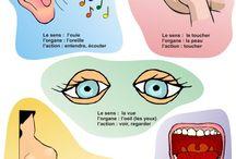 Five senses/ body