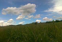 my monferrato / landscapes, culture, nature