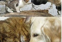 Pets / Together