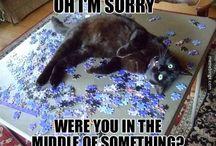 Katter och andra djur!!