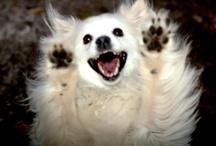 Hunde / dogs / Hunde-Fotos von Verwandten, Bekannten und fremden Leuten  /  Dog photos of relatives, acquaintances and strangers - Besuche meine Seite http://hunde-tipps24.de/
