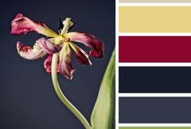 choose design colors / Websites that helps you choosing colors for your design works