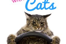 Cats Who Travel / Are you among the growing number of people who travel with their cats?
