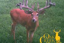 2016 Oak Creek Blog