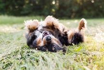 Pet Photography Inspo