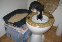 котикам