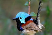 鳥 Bird